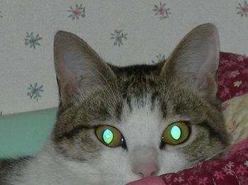 緑目.jpg
